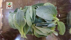 菁菜園生蠔葉