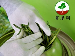 菁菜園海茴香純露