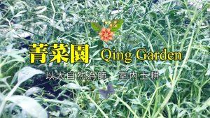 海茴香 菁菜園室內土耕